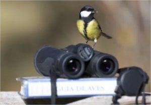 jumelles d'ornithologie